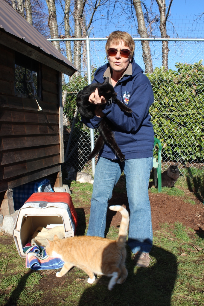 Happy Cat Haven volunteer, Marcia Timbers - aka The Cat Whisperer.