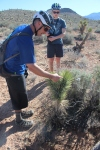 Guide Brandon Brizzolara points out the good, bad and ugly of desert flora and fauna.